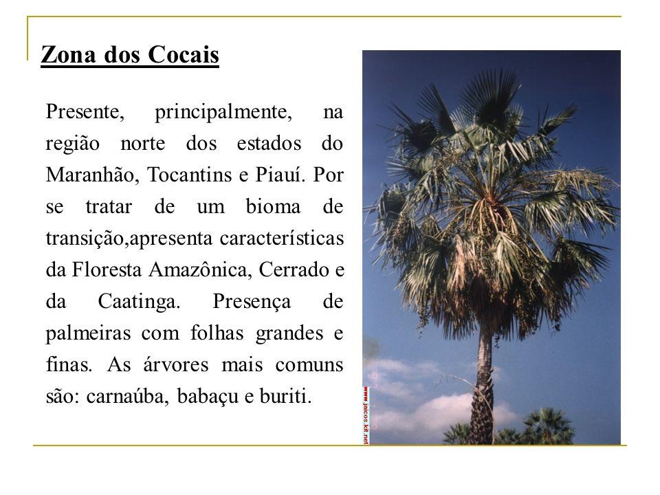 Zona dos Cocais Presente, principalmente, na região norte dos estados do Maranhão, Tocantins e Piauí. Por se tratar de um bioma de transição,apresenta