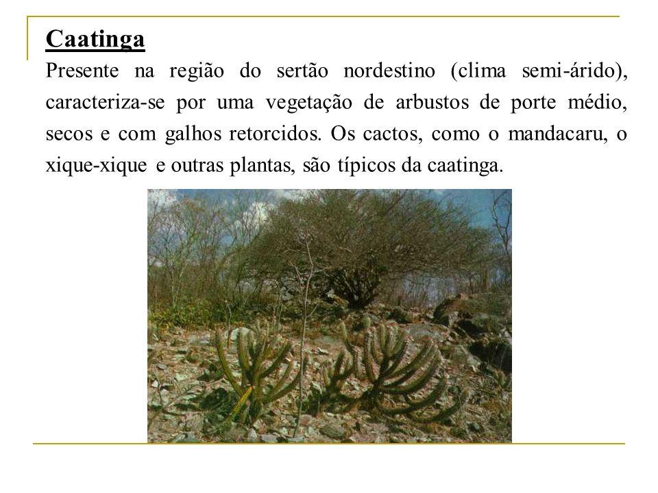 Caatinga Presente na região do sertão nordestino (clima semi-árido), caracteriza-se por uma vegetação de arbustos de porte médio, secos e com galhos retorcidos.
