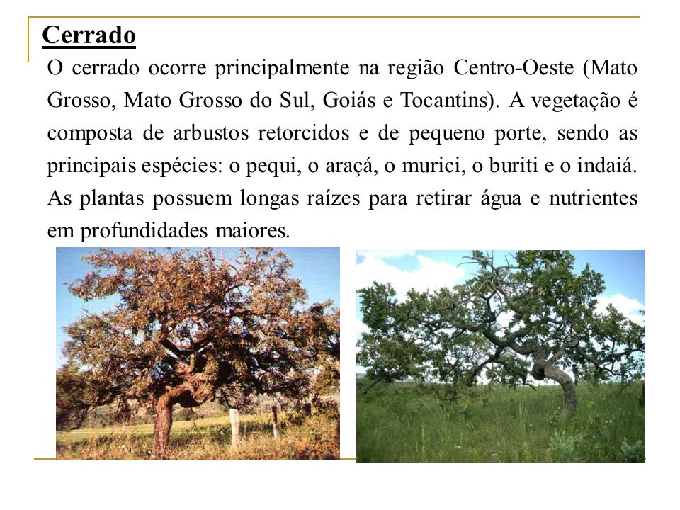 Cerrado O cerrado ocorre principalmente na região Centro-Oeste (Mato Grosso, Mato Grosso do Sul, Goiás e Tocantins). A vegetação é composta de arbusto