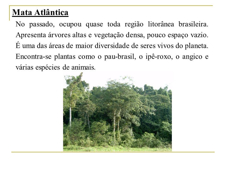 Mata Atlântica No passado, ocupou quase toda região litorânea brasileira. Apresenta árvores altas e vegetação densa, pouco espaço vazio. É uma das áre