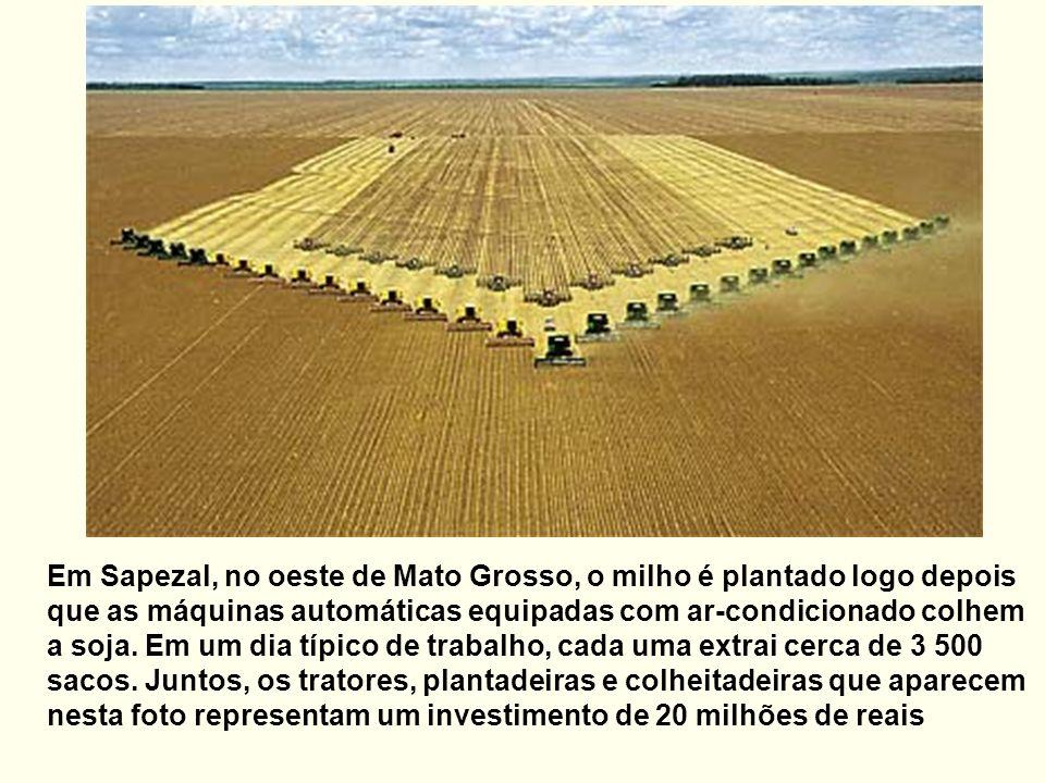 Em Sapezal, no oeste de Mato Grosso, o milho é plantado logo depois que as máquinas automáticas equipadas com ar-condicionado colhem a soja. Em um dia