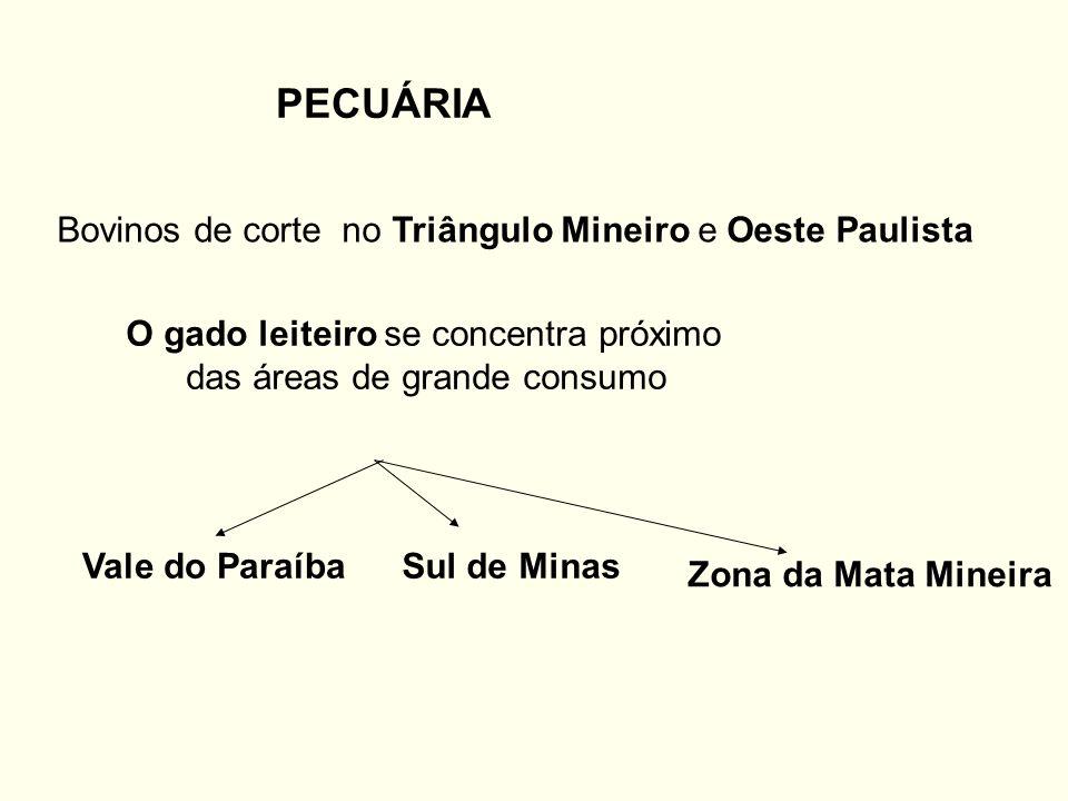 PECUÁRIA Bovinos de corte no Triângulo Mineiro e Oeste Paulista O gado leiteiro se concentra próximo das áreas de grande consumo Vale do ParaíbaSul de