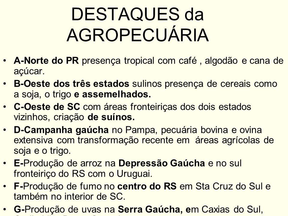 DESTAQUES da AGROPECUÁRIA A-Norte do PR presença tropical com café, algodão e cana de açúcar. B-Oeste dos três estados sulinos presença de cereais com