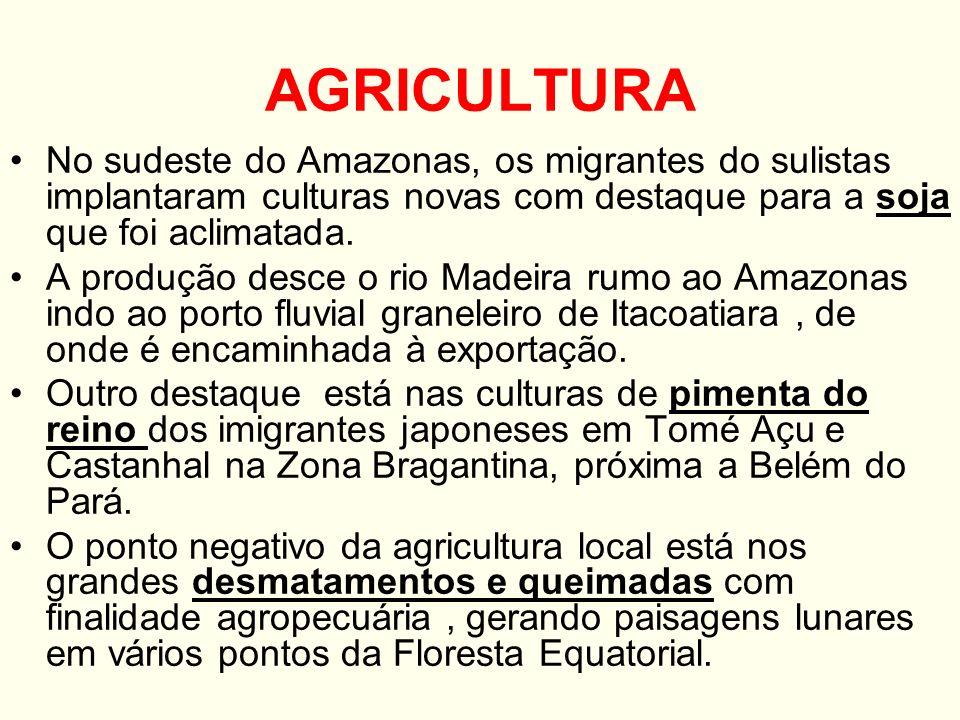 PECUÁRIA Praticada em vários pontos do Norte, principalmente o gado bovino criado nas pastagens naturais dos campos e cerrados de Boa Vista em RR.