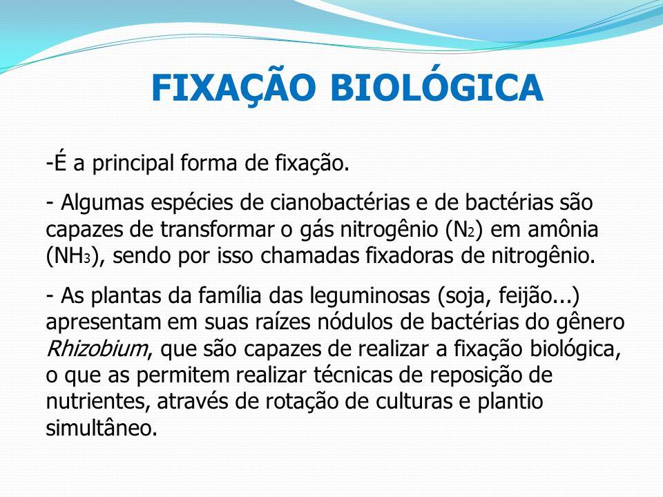 FIXAÇÃO BIOLÓGICA -É a principal forma de fixação. - Algumas espécies de cianobactérias e de bactérias são capazes de transformar o gás nitrogênio (N