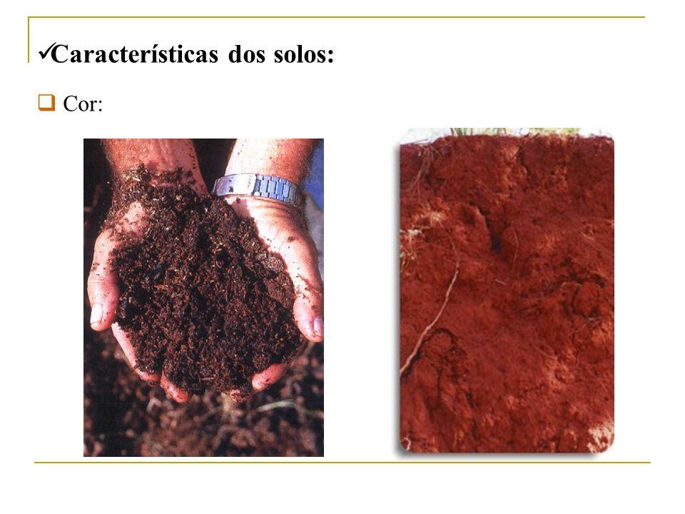 Características dos solos: Cor:
