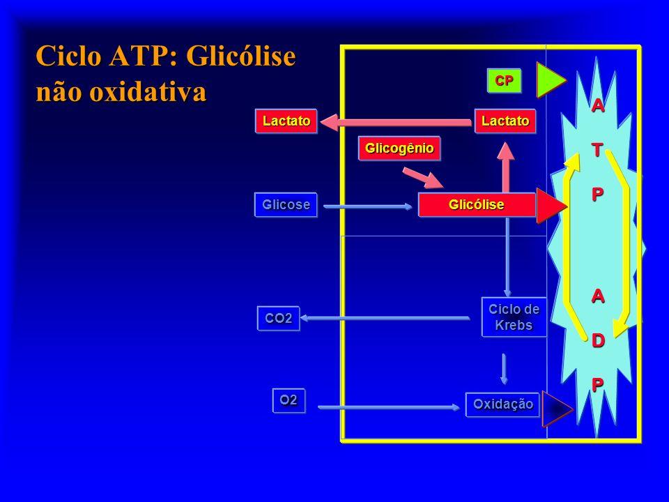 Reação da Mioquinase (MK) MK ADP + ATP AMP + NH 3 IMP