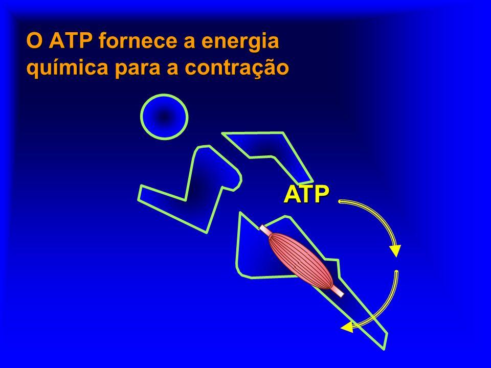 Termodinâmica do ATP n In vivo, a reação n ATP + Cr ADP + Pi n está em equilíbrio, com n K eq 20