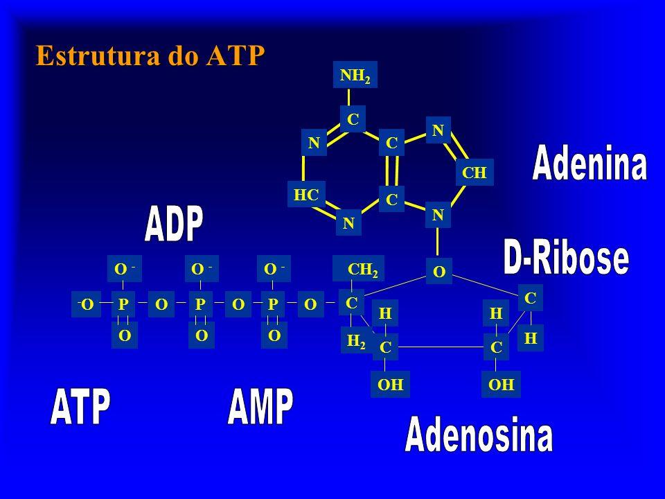 Vias energéticas reconvertem o ADP ATPADP