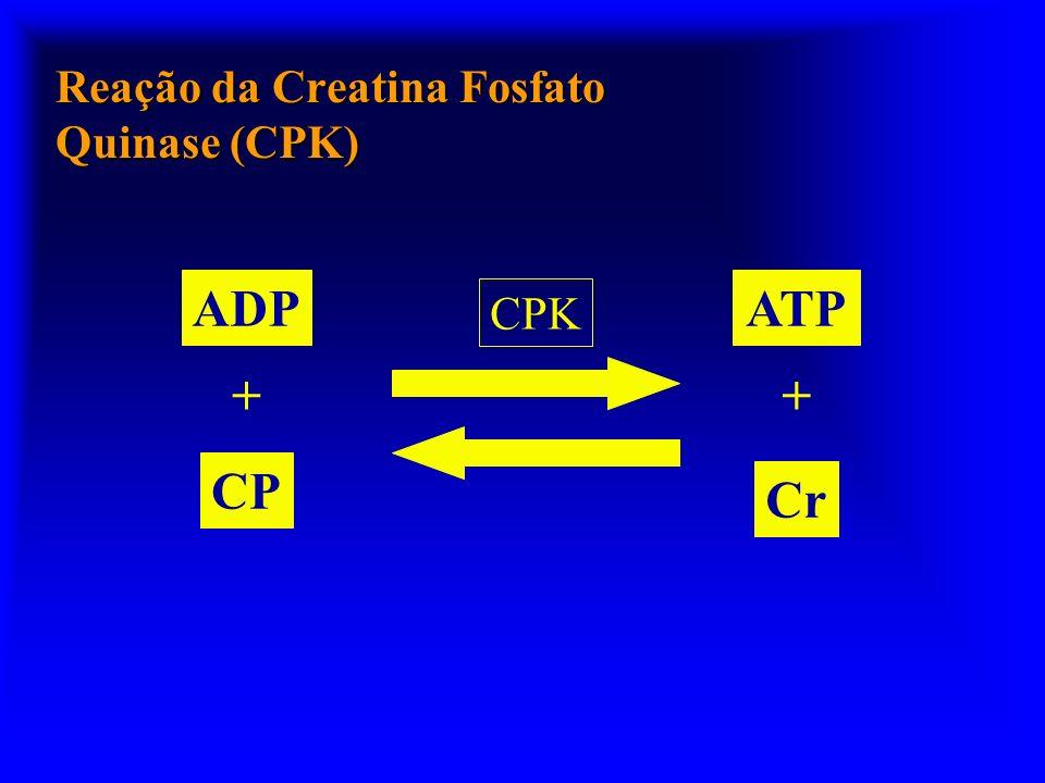 Reação da Creatina Fosfato Quinase (CPK) CPK ADP CP + ATP Cr +