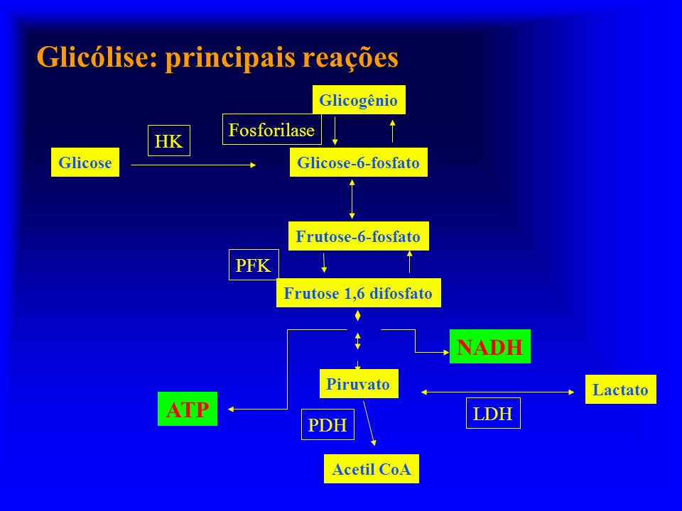 Glicólise: principais reações GlicoseGlicose-6-fosfato Glicogênio Frutose-6-fosfato Frutose 1,6 difosfato Piruvato Lactato HK PFK Fosforilase LDH ATP