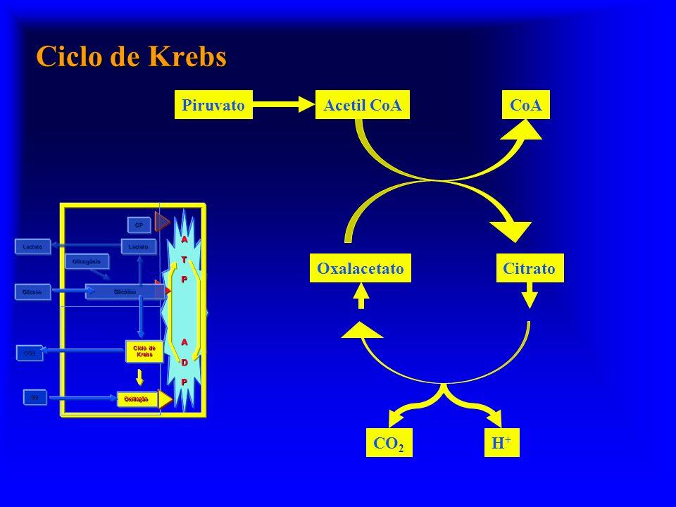 Ciclo de Krebs ATP ADP Glicogênio Glicólise Oxidação Ciclo de Krebs O2 CO2 Glicose CP LactatoLactato PiruvatoAcetil CoA OxalacetatoCitrato CO 2 H+H+ C