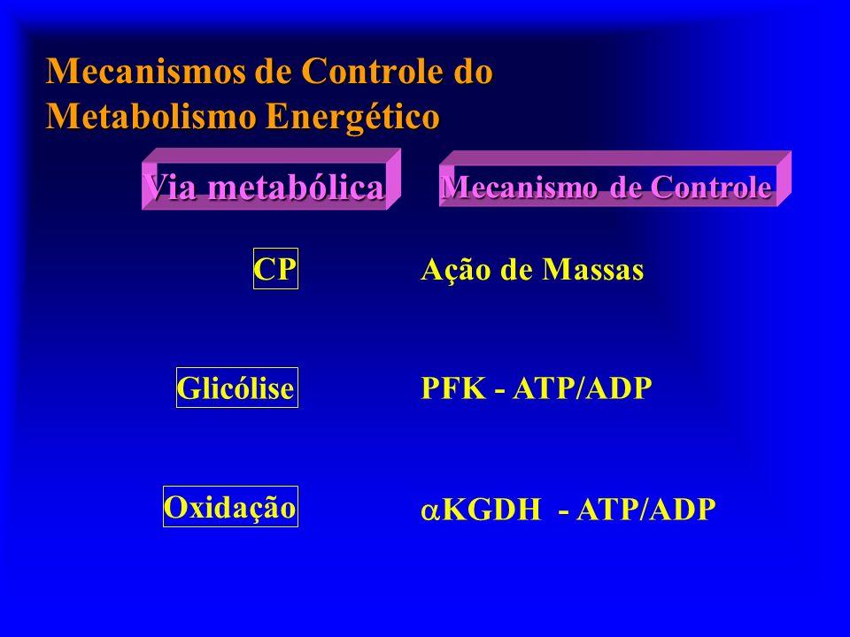 Mecanismos de Controle do Metabolismo Energético CP Ação de Massas Glicólise PFK - ATP/ADP Oxidação KGDH - ATP/ADP Via metabólica Mecanismo de Control