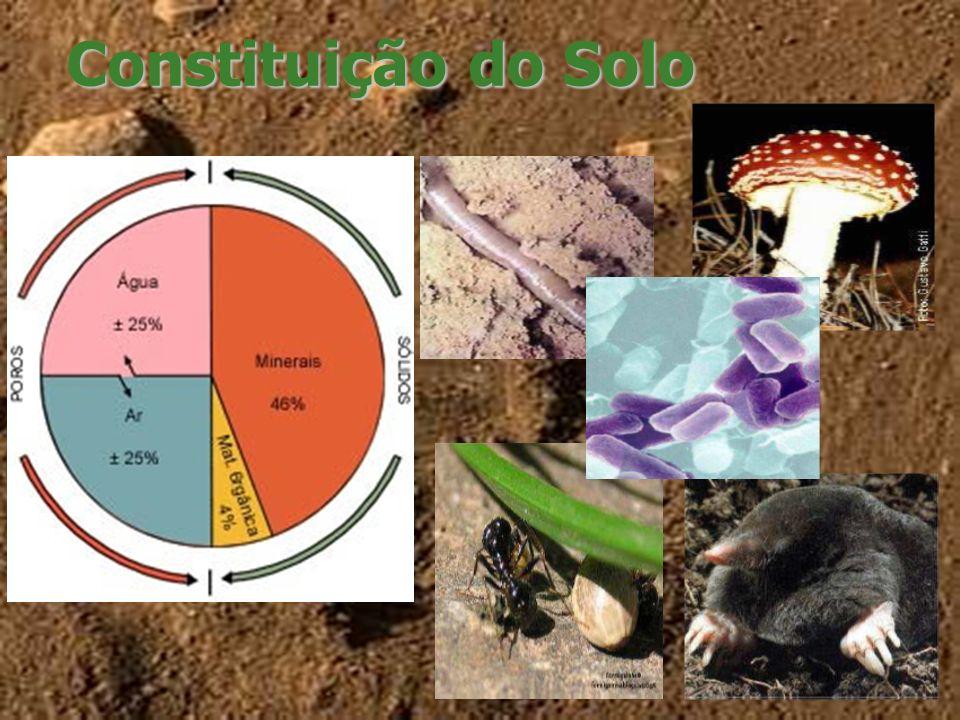 Importância do solo O solo é um componente fundamental do ecossistema terrestre pois é o principal substrato utilizado pelas plantas para o seu crescimento e disseminação.