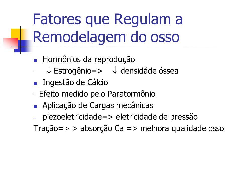 Fatores que Regulam a Remodelagem do osso Hormônios da reprodução - Estrogênio=> densidáde óssea Ingestão de Cálcio - Efeito medido pelo Paratormônio