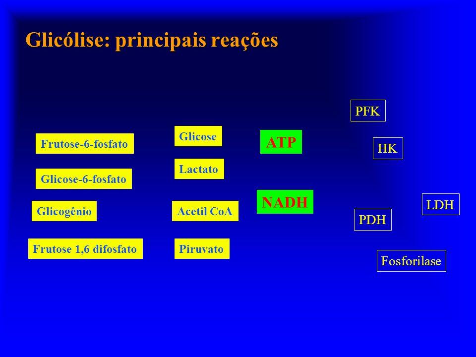 Glicólise: principais reações GlicoseGlicose-6-fosfato Glicogênio Frutose-6-fosfato Frutose 1,6 difosfato Piruvato Lactato HK PFK Fosforilase LDH ATP NADH PDH Acetil CoA