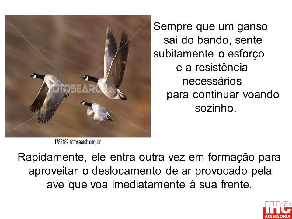 Sempre que um ganso sai do bando, sente subitamente o esforço e a resistência necessários para continuar voando sozinho. Rapidamente, ele entra outra