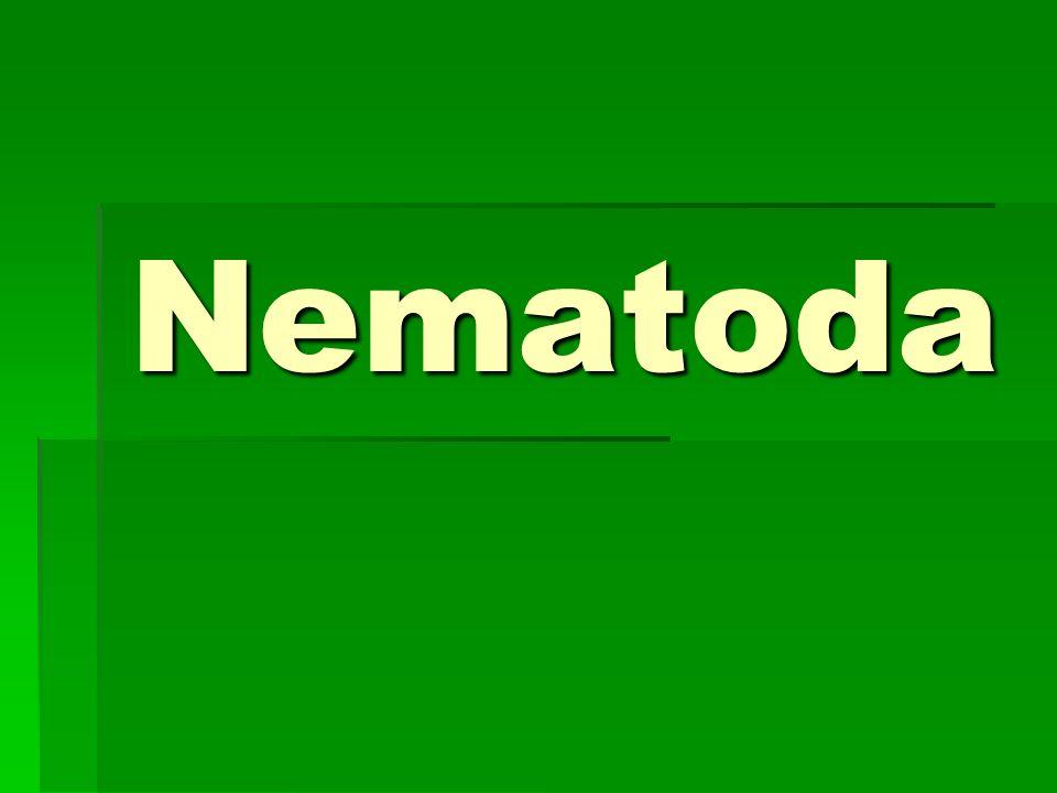Nematoda