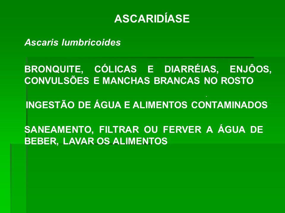 ASCARIDÍASE Ascaris lumbricoides. BRONQUITE, CÓLICAS E DIARRÉIAS, ENJÔOS, CONVULSÕES E MANCHAS BRANCAS NO ROSTO INGESTÃO DE ÁGUA E ALIMENTOS CONTAMINA