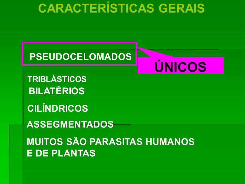 CARACTERÍSTICAS GERAIS PSEUDOCELOMADOS BILATÉRIOS CILÍNDRICOS ASSEGMENTADOS MUITOS SÃO PARASITAS HUMANOS E DE PLANTAS ÚNICOS TRIBLÁSTICOS