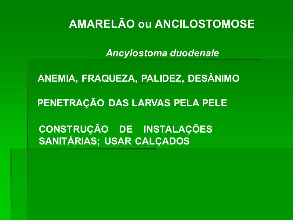 AMARELÃO ou ANCILOSTOMOSE Ancylostoma duodenale ANEMIA, FRAQUEZA, PALIDEZ, DESÂNIMO PENETRAÇÃO DAS LARVAS PELA PELE CONSTRUÇÃO DE INSTALAÇÕES SANITÁRI