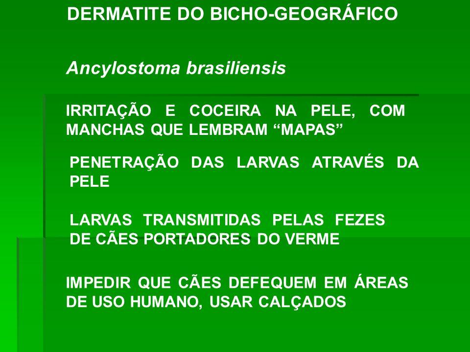 DERMATITE DO BICHO-GEOGRÁFICO Ancylostoma brasiliensis IRRITAÇÃO E COCEIRA NA PELE, COM MANCHAS QUE LEMBRAM MAPAS PENETRAÇÃO DAS LARVAS ATRAVÉS DA PEL