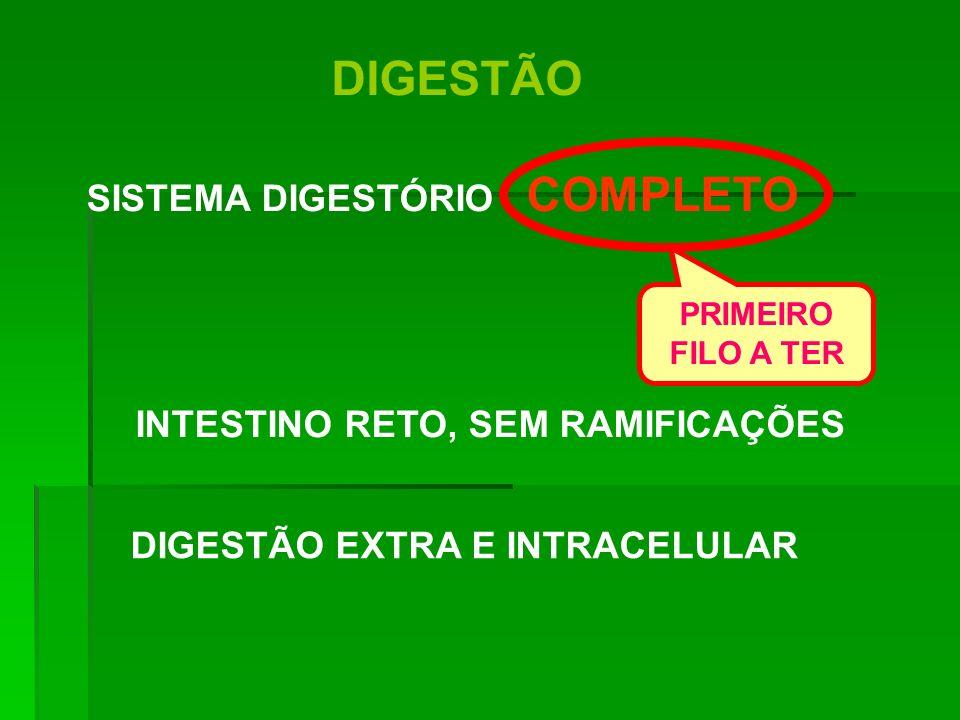 DIGESTÃO DIGESTÃO EXTRA E INTRACELULAR SISTEMA DIGESTÓRIO COMPLETO INTESTINO RETO, SEM RAMIFICAÇÕES PRIMEIRO FILO A TER