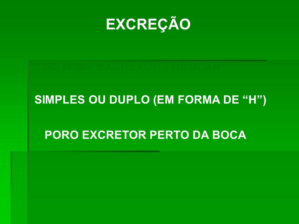EXCREÇÃO SISTEMA EXCRETOR TUBULAR SIMPLES OU DUPLO (EM FORMA DE H) PORO EXCRETOR PERTO DA BOCA