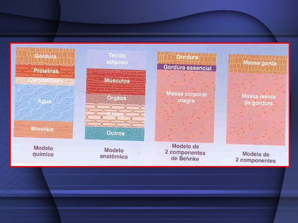 Modelo de 2 componentes Gordura MCM (fluídos corporais, músculo e ossos)