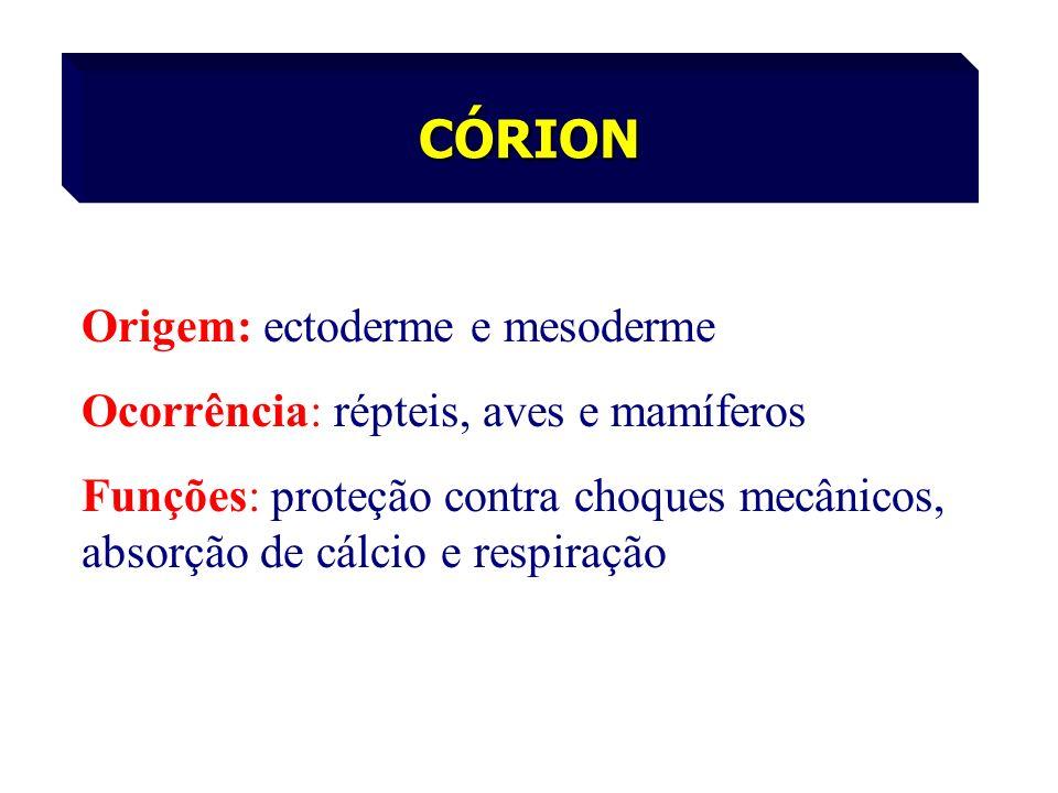 Origem: ectoderme e mesoderme Ocorrência: répteis, aves e mamíferos Funções: proteção contra choques mecânicos, absorção de cálcio e respiração CÓRION