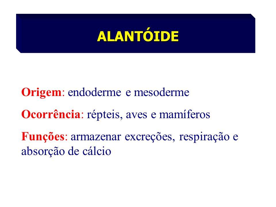 Origem: endoderme e mesoderme Ocorrência: répteis, aves e mamíferos Funções: armazenar excreções, respiração e absorção de cálcio ALANTÓIDE