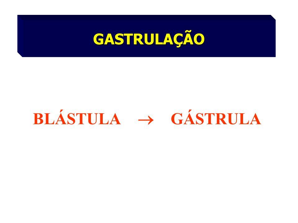 GASTRULAÇÃO BLÁSTULA GÁSTRULA