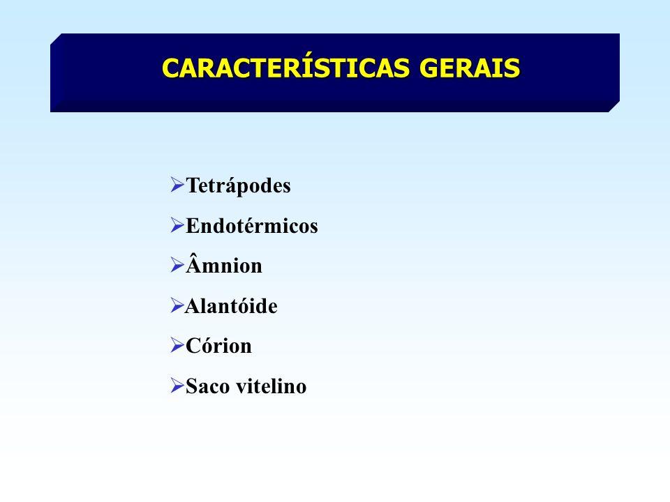 CARACTERÍSTICAS GERAIS Tetrápodes Endotérmicos Âmnion Alantóide Córion Saco vitelino