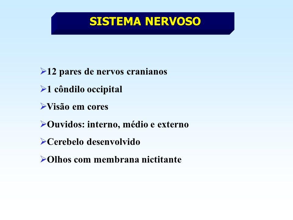 SISTEMA NERVOSO 12 pares de nervos cranianos 1 côndilo occipital Visão em cores Ouvidos: interno, médio e externo Cerebelo desenvolvido Olhos com membrana nictitante