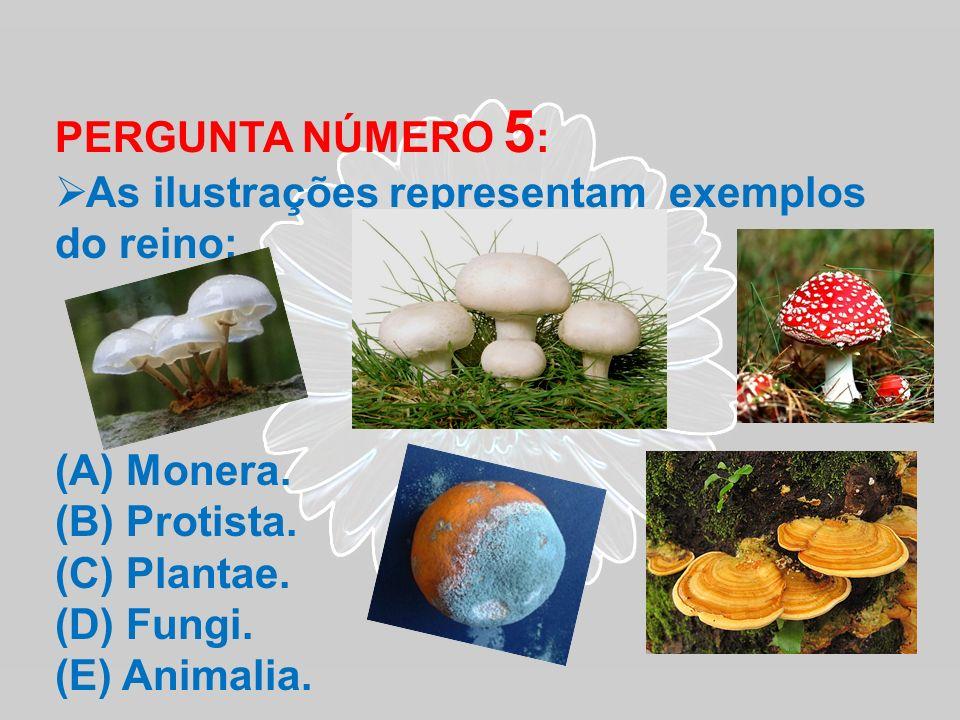 PERGUNTA NÚMERO 5 : As ilustrações representam exemplos do reino: (A) Monera. (B) Protista. (C) Plantae. (D) Fungi. (E) Animalia.