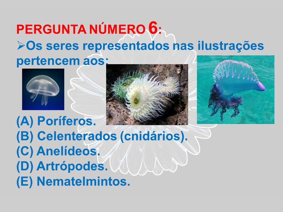 PERGUNTA NÚMERO 6 : Os seres representados nas ilustrações pertencem aos: (A) Poríferos. (B) Celenterados (cnidários). (C) Anelídeos. (D) Artrópodes.