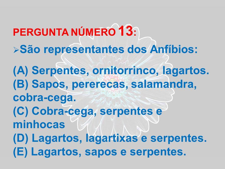 PERGUNTA NÚMERO 13 : São representantes dos Anfíbios: (A) Serpentes, ornitorrinco, lagartos. (B) Sapos, pererecas, salamandra, cobra-cega. (C) Cobra-c