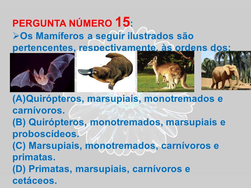 PERGUNTA NÚMERO 15 : Os Mamíferos a seguir ilustrados são pertencentes, respectivamente, às ordens dos: (A)Quirópteros, marsupiais, monotremados e car