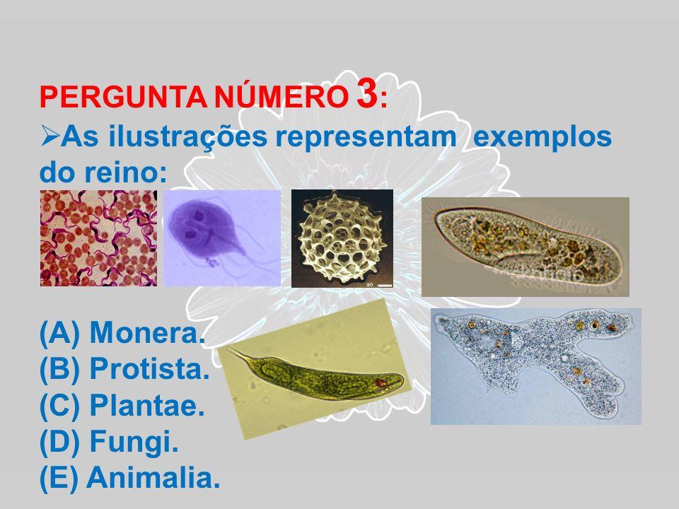PERGUNTA NÚMERO 3 : As ilustrações representam exemplos do reino: (A) Monera. (B) Protista. (C) Plantae. (D) Fungi. (E) Animalia.