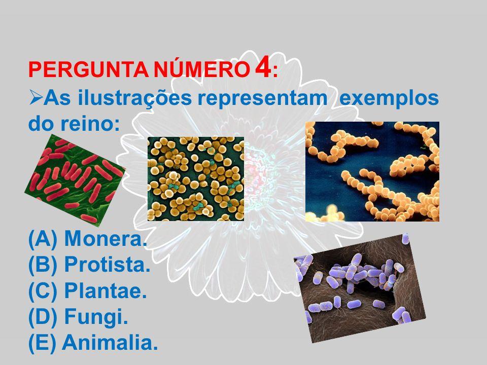 PERGUNTA NÚMERO 4 : As ilustrações representam exemplos do reino: (A) Monera. (B) Protista. (C) Plantae. (D) Fungi. (E) Animalia.
