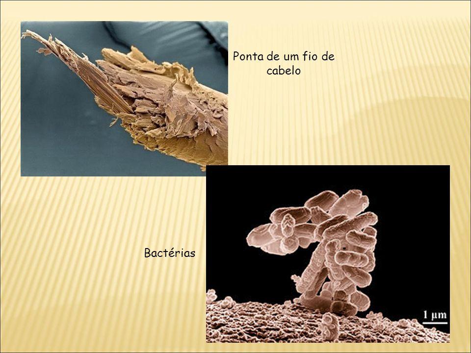Ponta de um fio de cabelo Bactérias