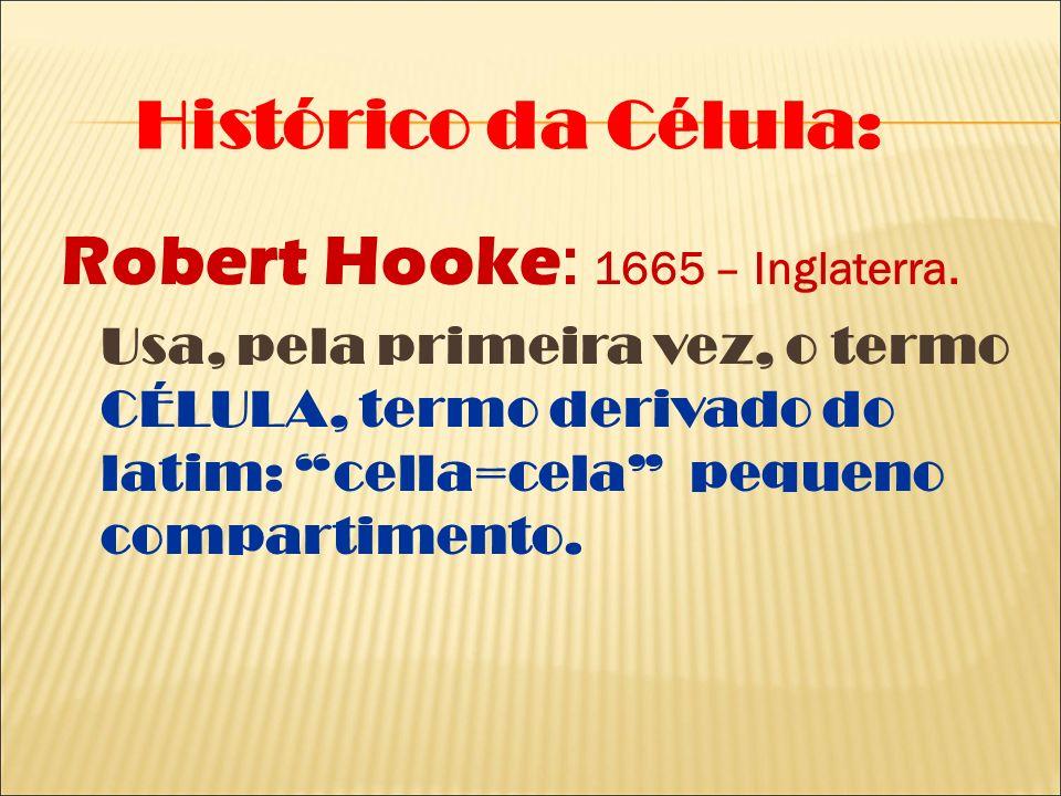 Robert Hooke : 1665 – Inglaterra. Usa, pela primeira vez, o termo CÉLULA, termo derivado do latim: cella=cela pequeno compartimento. Histórico da Célu