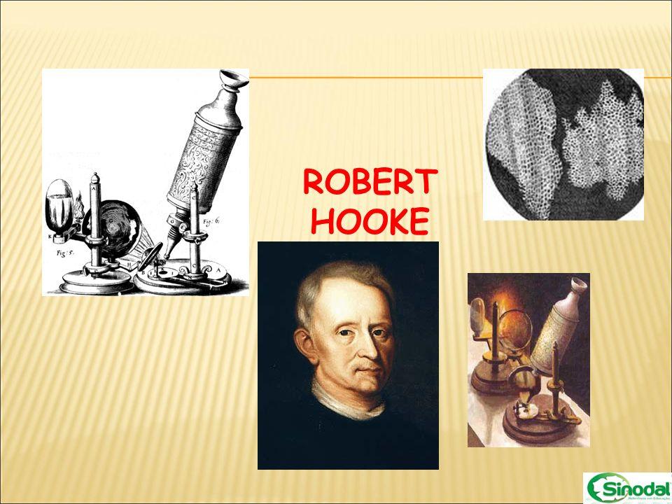 Esse termo foi usado pela primeira vez por Robert Hooke, quando esse cientista observava em um microscópio muito simples um pedaço de cortiça, que é um tecido vegetal obtido da casca de caules de certas árvores, no qual as células já morreram.