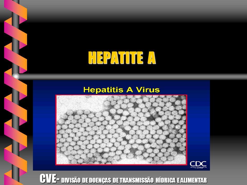 HEPATITE A HEPATITE A CVE- DIVISÃO DE DOENÇAS DE TRANSMISSÃO HÍDRICA E ALIMENTAR