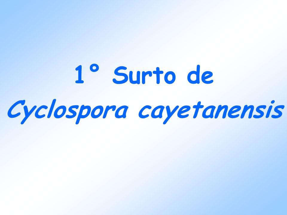 CONDUTAS Tratamento dos pacientes - Sulfametoxazol/Trimetropim (único medicamento indicado para tratamento de Cyclospora sp) Campanha educativa Interdição de principais poços suspeitos e outras medidas em relação ao sistema de água e esgoto (DIR 22 S.