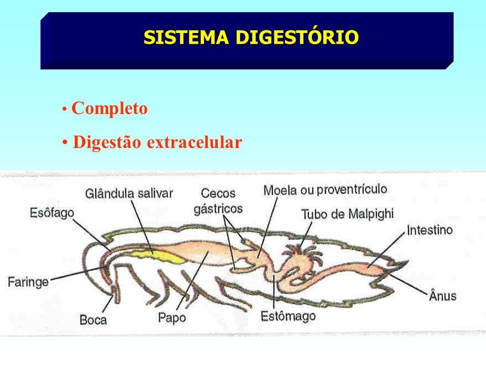 SISTEMA RESPIRATÓRIO TRAQUEAL