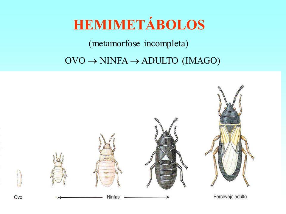 HOLOMETÁBOLOS (metamorfose completa) OVO LARVA PUPA IMAGO