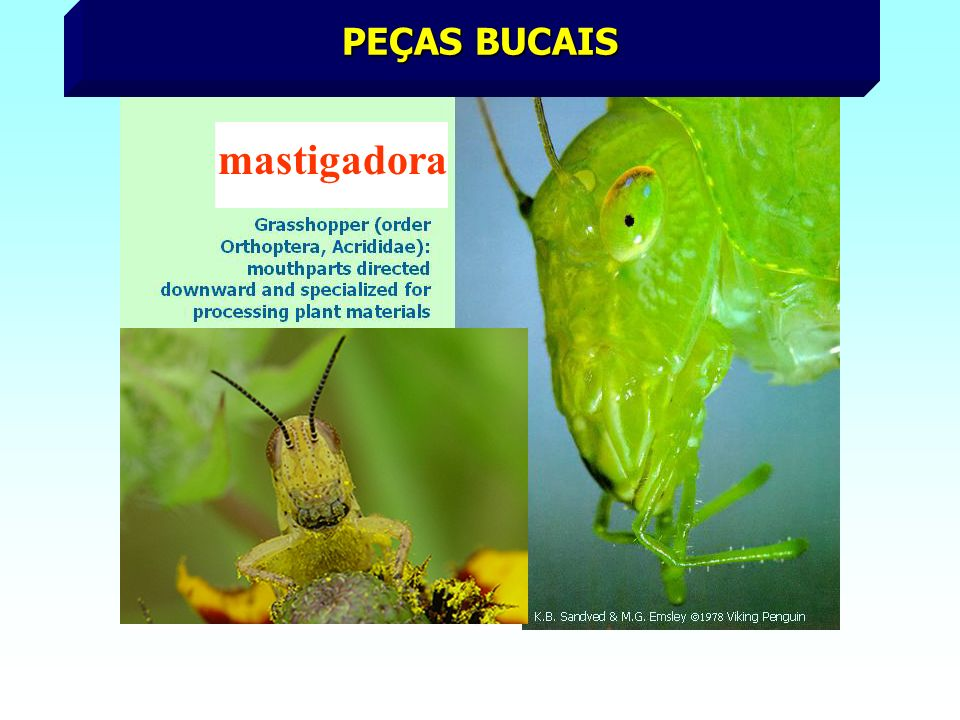 PICADORA - SUGADORA