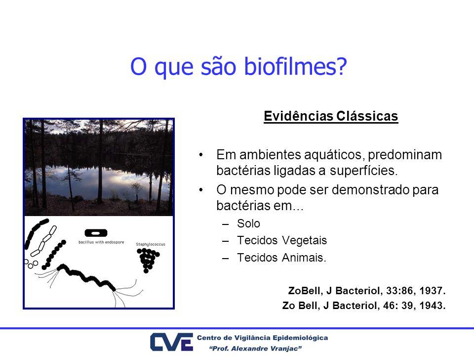 O que são biofilmes.