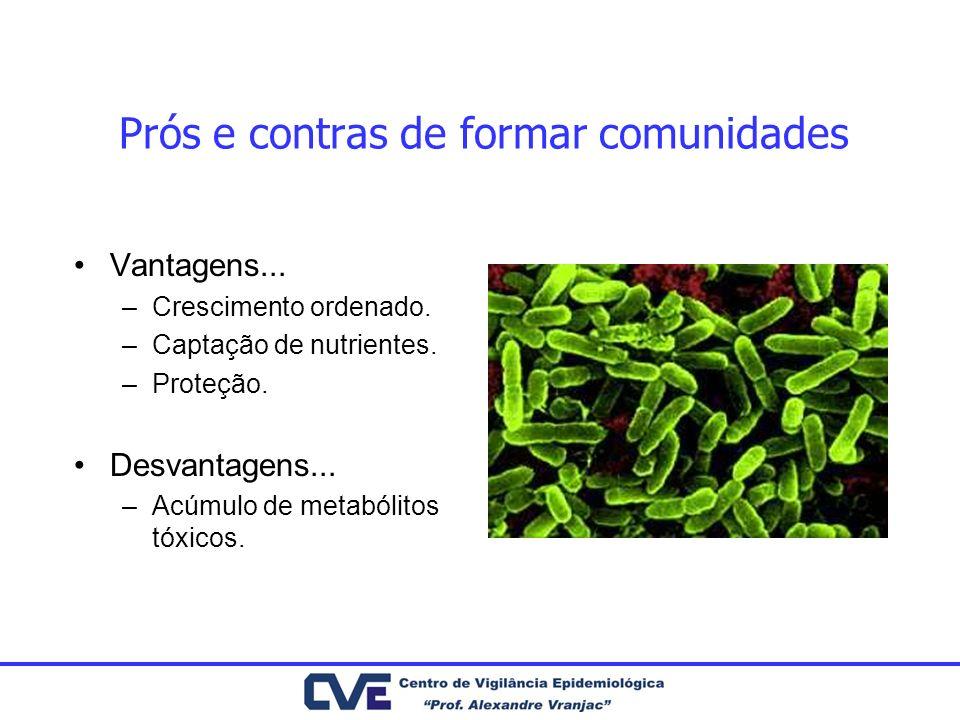 Prós e contras de formar comunidades Vantagens... –Crescimento ordenado. –Captação de nutrientes. –Proteção. Desvantagens... –Acúmulo de metabólitos t